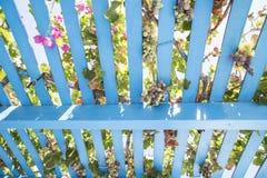 Estrutura de madeira pintada do caramanchão com videiras, uvas e as flores cor-de-rosa foto de stock