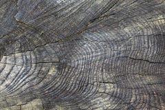 Estrutura de madeira de um tronco de árvore fotos de stock