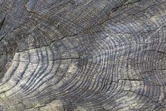 Estrutura de madeira de um tronco de ?rvore fotos de stock royalty free