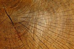 Estrutura de um tronco de ?rvore foto de stock