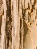 Estrutura de uma árvore deciduous Fotografia de Stock