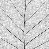 Estrutura detalhada elegante da folha da série botânica única no estilo do esboço preto e branco no fundo branco ilustração royalty free