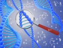 Estrutura do ADN sob uma lupa 3d rendem Imagens de Stock Royalty Free