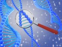 Estrutura do ADN sob uma lupa 3d rendem Fotografia de Stock Royalty Free