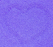 Estrutura do Lilac Foto de Stock