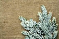 Estrutura do molde do Natal com ramo do pinho da neve Fotos de Stock Royalty Free