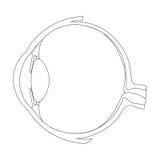 A estrutura do olho como um sistema ótico Fotografia de Stock Royalty Free