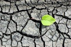 Estrutura do solo seco Imagens de Stock