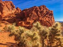 Estrutura e cacto vermelhos da rocha no vale do fogo, Nevada, EUA fotos de stock
