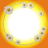 Estrutura oval Imagem de Stock