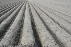 Estruturas de um campo arado da tulipa Fotos de Stock Royalty Free