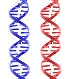 Estruturas isoladas lustrosas vermelhas e azuis do ADN Foto de Stock Royalty Free