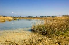 Estuário calmo do rio Imagem de Stock Royalty Free