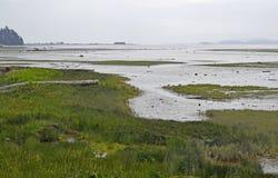 Estuário de Courtenay durante a maré baixa Fotos de Stock Royalty Free