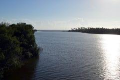 Estuaire dans la forêt Photos libres de droits
