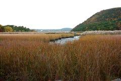 Estuario con la hierba seca imagen de archivo libre de regalías