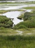 Estuario de Courtenay durante marea baja Fotos de archivo libres de regalías