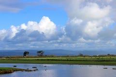 Estuarium en pastoraal landschap Royalty-vrije Stock Foto's