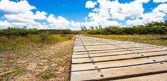 Estuary Boardwalk. On the San Lucia River South Africa Stock Photos
