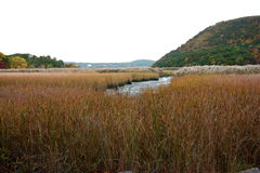 Estuary with dry grass. In the Hudson valley near New York, USA Royalty Free Stock Image