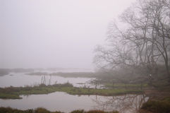 Estuary. Fog over the river at dawn Stock Image