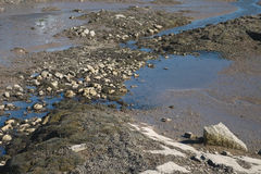 Estuary low tide exposes the thick mud and seaweed and barnacle Stock Images