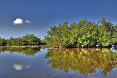 Estuary and Mangroves Stock Photography