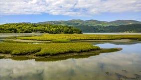 Estuary Royalty Free Stock Photography