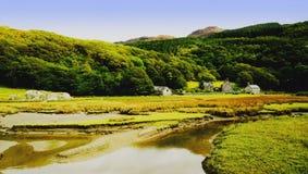 Estuary Stock Images