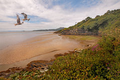 Estuary at Portmeirion. The Estuary near Portmeirion is called Traeth Bach and flows into Tremadog Bay in North Wales, UK Royalty Free Stock Images
