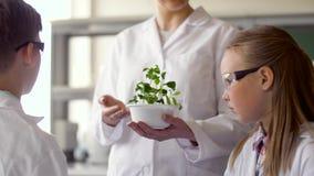 Estudantes e professor com a planta na turma de Biologia video estoque