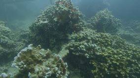 Estudiando corales bajo el agua almacen de metraje de vídeo