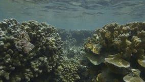 Estudiando corales bajo el agua almacen de video