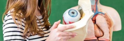 Estudiante femenino joven de la High School secundaria que lleva a cabo el modelo del ojo humano imagen de archivo