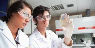 Estudiantes enfocados en la mirada de la ciencia Fotografía de archivo