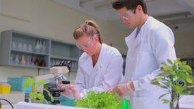 Estudiantes que hacen la investigación de la planta en el laboratorio almacen de video