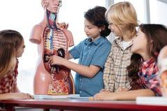 Estudiantes resueltos increíbles fascinados sobre la anatomía humana Imagen de archivo libre de regalías
