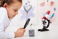 Estudio de la chica joven una planta que crece en beneficiario plástico imagen de archivo