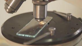 Estudio de la semilla brotada debajo de un microscopio biológico metrajes