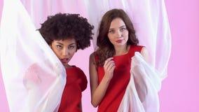 Estudio de las mujeres jovenes aislado en el día rosado del ` s de las mujeres que presenta con velo almacen de video
