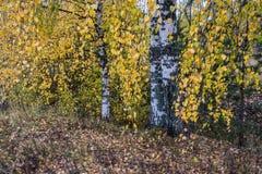 Estudio del otoño Fotografía de archivo libre de regalías
