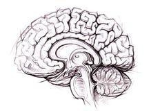 Estudio skethy del lápiz del cerebro humano stock de ilustración