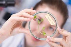 Estudo da mulher de plantas alteradas genéticas de GMO no laborator Imagem de Stock