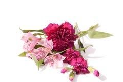 Estudo nos malvas & nas cor-de-rosa Fotos de Stock Royalty Free