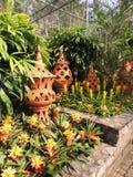 Estufa com flores e os potenciômetros delicados da argila Foto de Stock