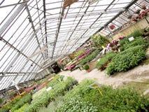 Estufa com opinião das plantas do ângulo diferente Foto de Stock Royalty Free