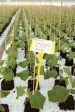 Estufa com plantas. fotos de stock