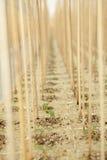 Estufa com plantas. imagens de stock