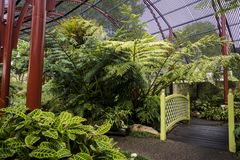 Estufa de Sydney Fernery, jardins botânicos reais, Sydney, Austrália fotografia de stock