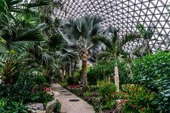 Estufa 3 do jardim botânico de China Shanghai fotos de stock